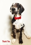 Hannibal lector 4.5 months and rocking his bow tie!!